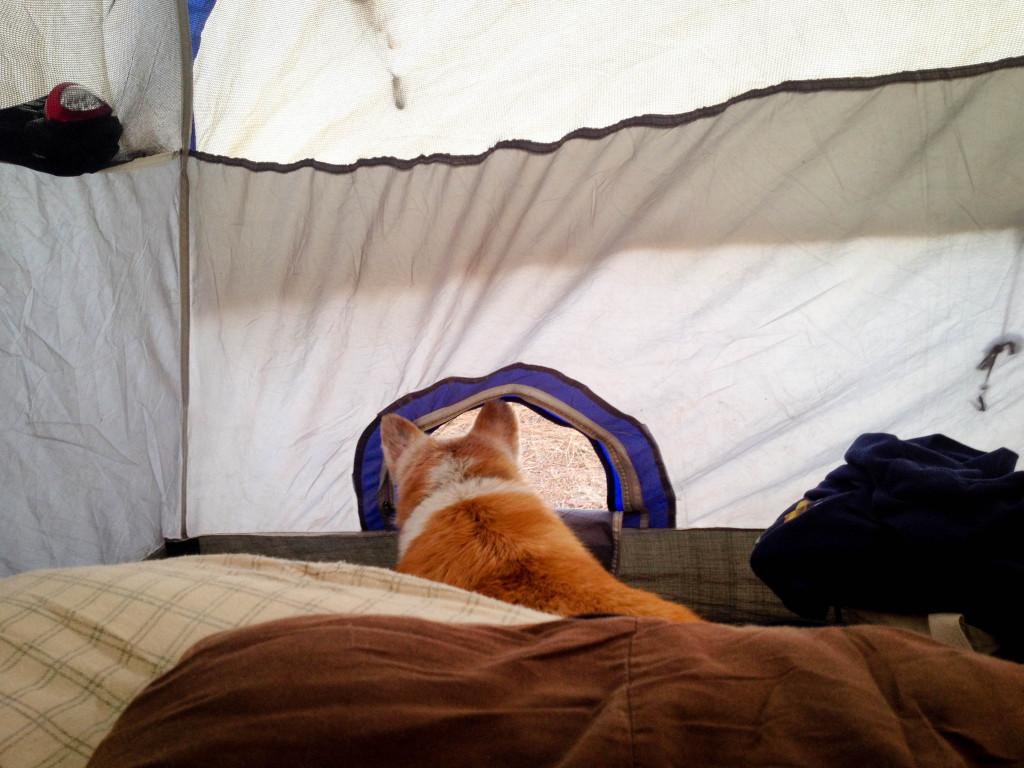 nabby doggy door tent